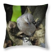 Curious Mockingbird Throw Pillow