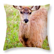 Curious Mule Deer Frolicking On A Colorado Spring Afternoon Throw Pillow