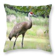 Curious Sandhill Crane Throw Pillow