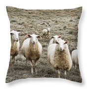 Curious Sheep Throw Pillow