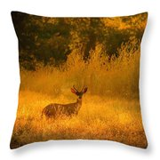 Curious Visitor Throw Pillow