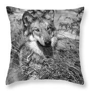 Curious Wolf Pup Throw Pillow