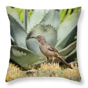 Curve-billed Thrasher-img_814418 Throw Pillow