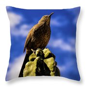 Curved Billed Thrasher Throw Pillow