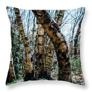 Curved Birch Tree Throw Pillow