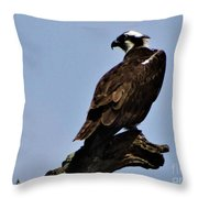 Curved Osprey Throw Pillow