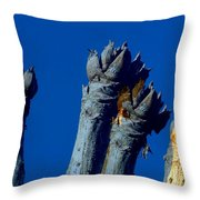 Cussonia In Blue Throw Pillow