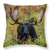 Custer In Autumn Throw Pillow