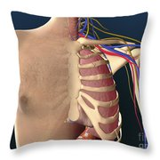 Cutaway View Of Male Chest Showing Lung Throw Pillow