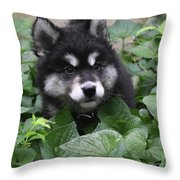 Cute Alusky Puppy In A Bunch Of Plant Foliage Throw Pillow