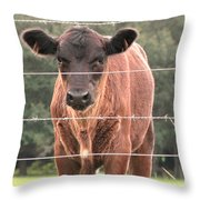 Cute Calf Throw Pillow