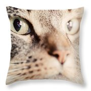 Cute Cat Close-up Portrait Throw Pillow