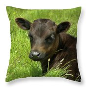 Cute Cow Throw Pillow by Terri Waters