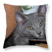 Cute Even If Looking A Bit Bored Throw Pillow