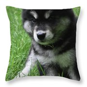 Cute Fluffy Alusky Puppy Sitting Up In A Yard Throw Pillow