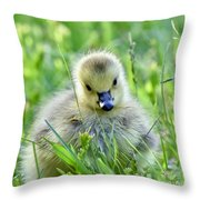 Cute Goose Chick Throw Pillow