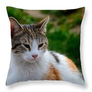 Cute Grey White And Orange Cat Poses And Gazes Throw Pillow