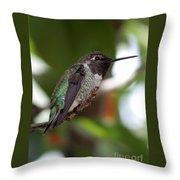 Cute Hummingbird Ready For Action Throw Pillow