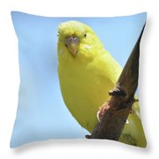 Cute Little Yellow Budgie Bird In Nature Throw Pillow