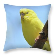 Cute Little Yellow Parakeet In The Rainforest Throw Pillow