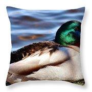 Cute Male Mallard Duck Throw Pillow