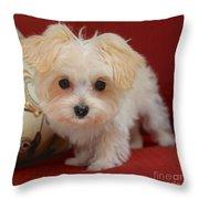 Cute Maltipoo Throw Pillow