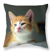 Cute Orange Kitten With Large Paws In Sunny Day Throw Pillow