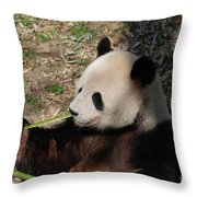 Cute Panda Bear Eating A Green Shoot Of Bamboo Throw Pillow