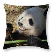 Cute Panda Bear With Very Sharp Teeth Eating Bamboo Throw Pillow