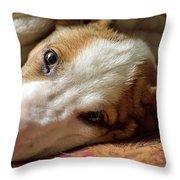 Cute Puppy Cuddles Throw Pillow
