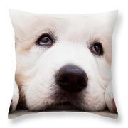 Cute White Puppy Dog Lying And Looking Up. Polish Tatra Sheepdog Throw Pillow