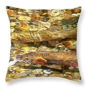 Cutthroat Trout In Clear Mountain Stream Throw Pillow