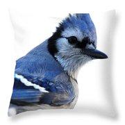 Cyanocitta Cristata Throw Pillow