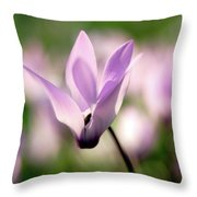 Cyclamen Persicum Persian Violets Throw Pillow