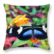 Cydno Longwing Butterfly Throw Pillow