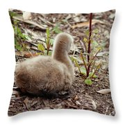 Cygnet I Throw Pillow
