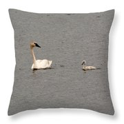 Cygnet Swim Throw Pillow
