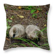 Cygnets Throw Pillow