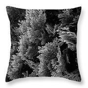 Cypress Branches No.1 Throw Pillow