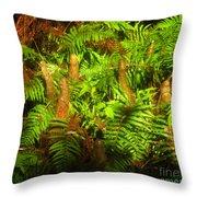 Cypress Knees In Ferns Throw Pillow