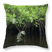 Cypress Leaves And Fluted Trunks Throw Pillow