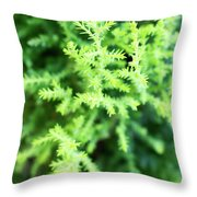Cypress Leaves Close Up Throw Pillow