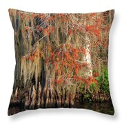 Cypress Winter Colors Throw Pillow