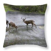 D-a0033 Mule Deer Throw Pillow
