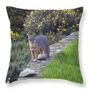 D-a0037 Gray Fox On Our Property Throw Pillow