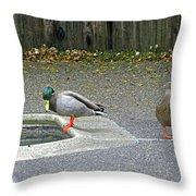 D-a0048 Mallard Ducks In Our Yard Throw Pillow