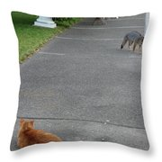 D-a0050-dc Gray Fox And Our Cat On Our Pool Deck Throw Pillow