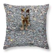 D-a0051-dc Gray Fox Pup Throw Pillow