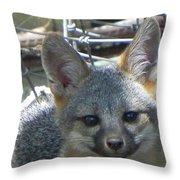 D-a0068 Gray Fox Pup Throw Pillow