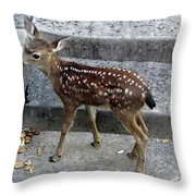 D-a0069 Mule Deer Fawn On Our Property On Sonoma Mountain Throw Pillow